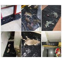 Large Size Mice Mouse Rodent Glue Traps Board Super Sticky Rats Snake Bug Safe