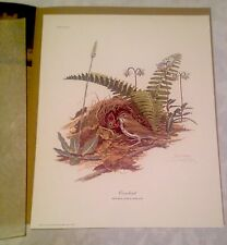 Ray Harm Ovenbird Signed Print Lithograph With Gallery Envelope And Artist Card