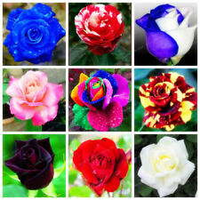 100Pcs Rose Flower Seeds 20 Kinds Beautiful Perennial Plants Garden Decoration