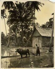 SUMATRA SOERAOSO MINANGKABAU HOUSE PLOWING PHOTO