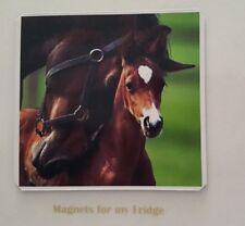 MOTHERLY LOVE HORSES (MARE & FOAL) FRIDGE MAGNET - M673