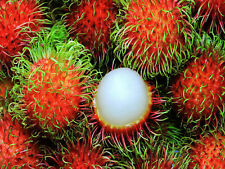 5PCS Rambutan Seed Red Fruits Malaysia Miracle Fruit Seeds Plant Giant PlantTree