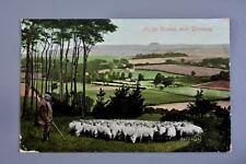 R&L Postcard: On the Downs Near Worthing Shepherd Sheep Farmer