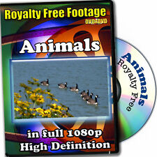 Animals-HD Royalty Free Video Stock Footage, Commercial