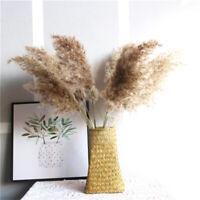 20x Natural Dried Pampas Grass Reed Flower Bunch Wedding Bouquet Decors hot