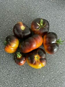 Lucid Gem Tomato Seeds x 10 Rare, Heirloom Tomatoes
