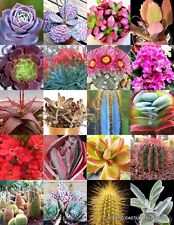 COLOR SUCCULENT MIX rare plant exotic cactus flower succulents seed 30 seeds