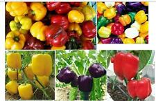 60 multi Color Pepper Seeds Red Yellow Green Purple White Vegetable Seeds Sweet