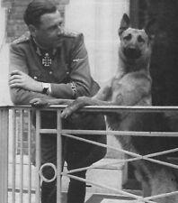 WW2 Photo WWII German Shepherd & Soldier World War Two Wehrmacht Germany / 2491