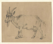 Oluf August Hermansen, ink drawing. A goat, late 1800s