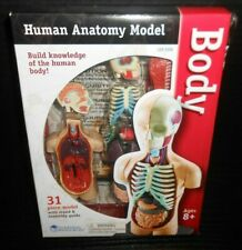 Learning Resources Model Human Body Anatomy 3336