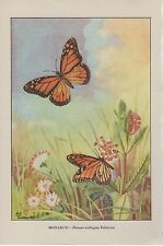 "1917 Vintage BUTTERFLIES ""MONARCH BUTTERFLY"" A LOVELY COLOR Art Plate Lithograph"