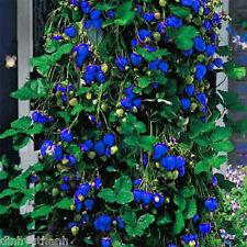 1000PCS Blue Climbing Strawberry Seeds
