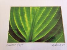 Modern Abstract Green Plant Life Leaf Digital Drawing Print Pro Matted Deb Booth