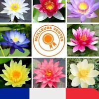 20 Graines Fleurs de LOTUS Sacré MULTI COULEURS Cultiver en intérieur ou BASSIN