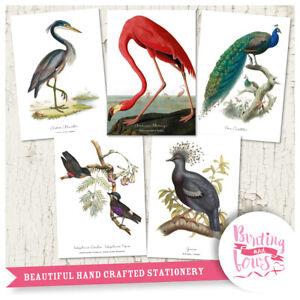 Vintage A4 Prints - Set of 5 Birds Flamingo Peacock Heron, Wall Art Illustration
