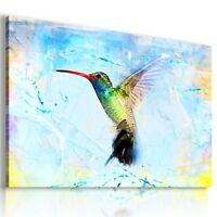 PAINTING BIRDS HUMMING-BIRD ANIMALS PRINT CANVAS WALL ART PICTURE AB716  MATAGA
