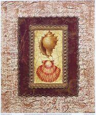 Nicola rabbett SEA SHELLS MARINE designer art imprimer nouvelle taille:23 cm x 19cm env rare