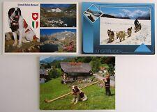 3x Hunde Motiv auf Postkarten SCHWEIZ color Postkarten Ansichtskarten Hund Dogs