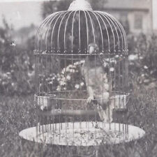 1910s RP POSTCARD SOMEONE'S PET PARROT IN A CAGE