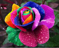 100Pcs Splendid Rare Rainbow Rose Lover Flower Seeds Garden Colorful Plant Decor