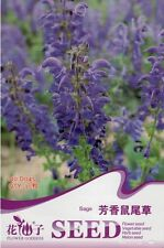 1 Pack 30 Fragrant Sage Seed SaIvia Farinacea Aromatic Herb Plant Seeds Hot D045