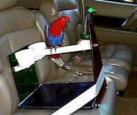 Parrot CAR SEAT / TABLE PERCH (acrylic) cups toy pedicure perch maintains nails