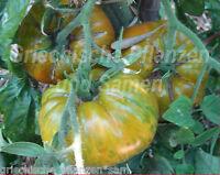 🔥 🍅 BIG ZEBRA Tomate ** gelb gestreift ** Tomaten *10 Samen