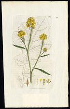 Antique Botany Print-COMMON MUSTARD-SINAPIS NIGRA-Smith-Sowerby-1833