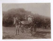 PHOTO ANCIENNE Voiture à cheval Attelage Famille Transport Vers 1900 Calèche