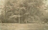 Clophill UK Bedfordshire Woods 1912 RPPC Photo Postcard 5857