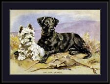 English Print West Highland Fox Terrier Dog Art Picture