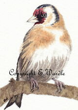 """ACEO 2.5"""" X 3.5"""" Canvas Print of Watercolour 'Windswept Goldfinch' Bird"""