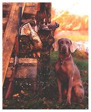 Weimaraner Hunting Gundog DE CHASSE CHIEN ART PHOTO POSTER - Fusil et jeu