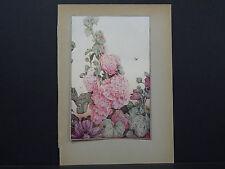 Botanicals, Floral, Edward J. Detmold, c. 1913 #01