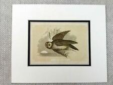 Antique (Pre - 1900) Engraving Animals Art Prints