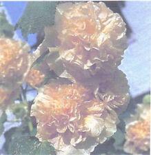 English Altea Althaea Rosea [Giallo] 50 Semi
