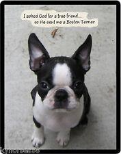 Boston Terrier True Friend Refrigerator Magnet