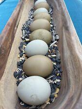10+ Olive Egger Hatching Eggs  �