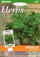 Parsley Komon Herb /& Spice Vegetable apx 3500 Seeds Garden Pot