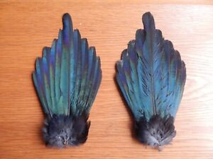 2 Complete Dried Magpie Tail Feathers Fly Tying Art Crafts Taxidermy