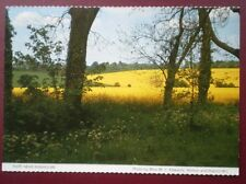 POSTCARD LINCOLNSHIRE RISEHOLME SOME RAPE FIELDS