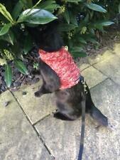 Mynwood Cat Walking Jacket Harness Vest Fleeces and Faux Suedes Fabrics