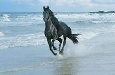 Incorniciato stampa-Nero Friesian Cavallo in esecuzione sulla spiaggia (POSTER PICTURE ART)