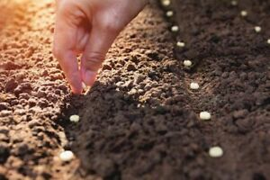 vegetable fruit cactus succulent flower seeds