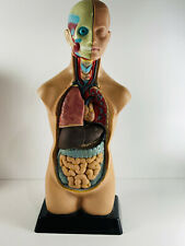 "Vintage 20"" Anatomical Medical Human Body Science Body Great Size"