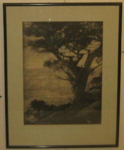 Antique HENRY RAVELL 'Cypress Tree Pebble Beach CALIFORNIA' Gum Bichromate PHOTO