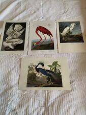 A Lovely Set Of 4 X AUDUBON Prints Birds/Flamingo Of 19th C Original Engravings