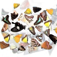100 BUTTERFLIES MOTHS PAPERED UNMOUNTED WINGS CLOSED WHOLESALE LOT MIX