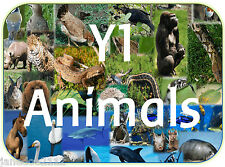 KS1 Y1 Science ANIMALS fish birds reptiles mammals etc teaching resources on CD